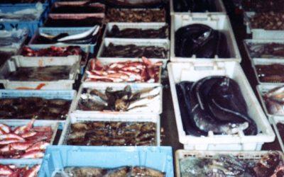 Com saber que el peix que estem comprant és de la Llotja de Vilanova