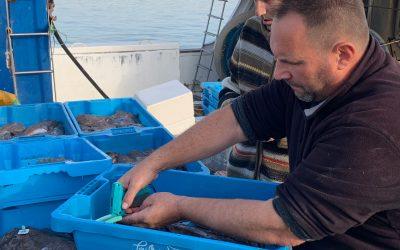 Implementat el sistema d'etiquetatge del peix de Vilanova